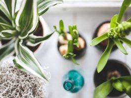 piante da interno pendenti