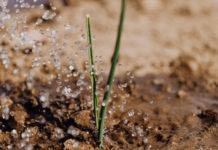 irrigazioni da giardino