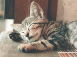 gatti stress